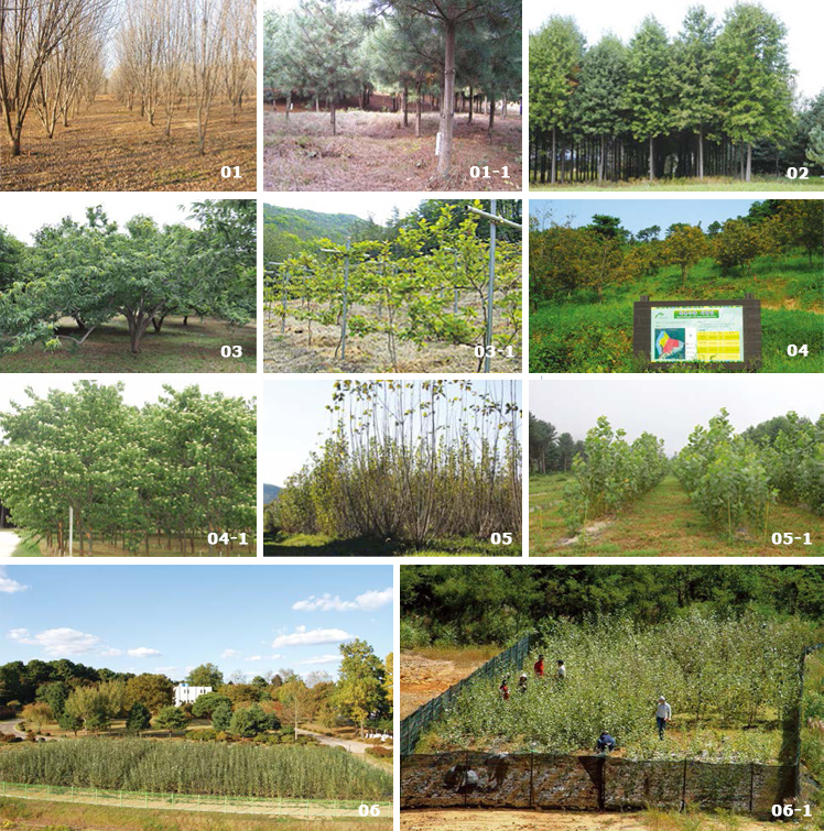 Major activities in the Suwon Experimental Forest image(01, 01-1, 02, 03, 03-1, 04, 04-1, 05, 05-1, 06, 06-1)