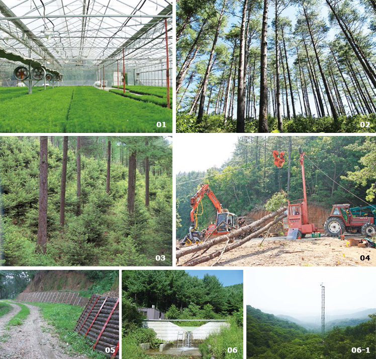 Major activities in the Gwangneung Experimental Forest image(01, 02, 03, 04, 05, 06, 06-1)